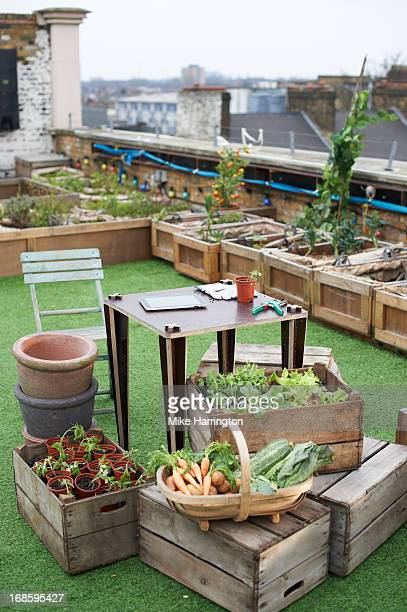 Desk in urban roof garden surrounded by plants.