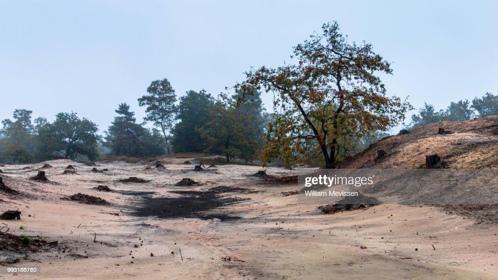 Desolate Tree (II) : Stockfoto