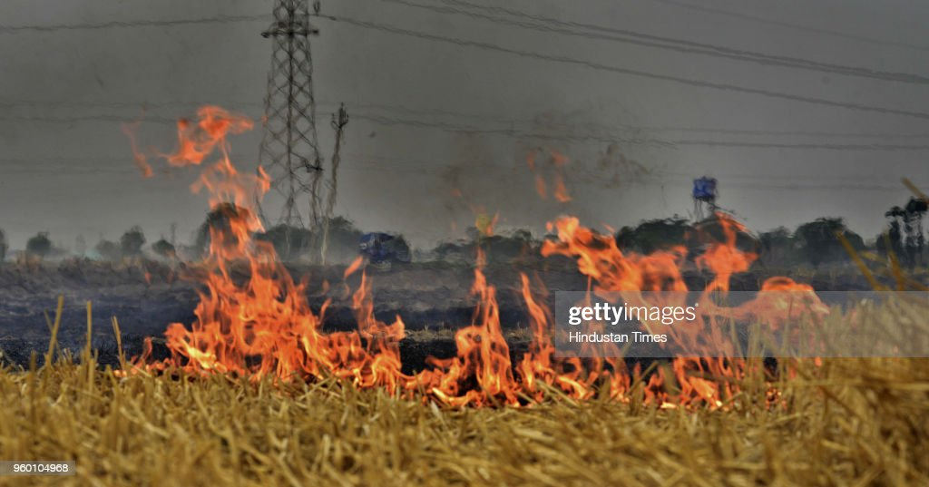 Farmers Burns Stubble In Wheat Field On The Outskirts Of Ludhiana