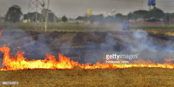 Despite a ban on stubble burning by the administration farmers still burn stubble in wheat field on the outskirts of Ludhiana on May 19 2018 in...
