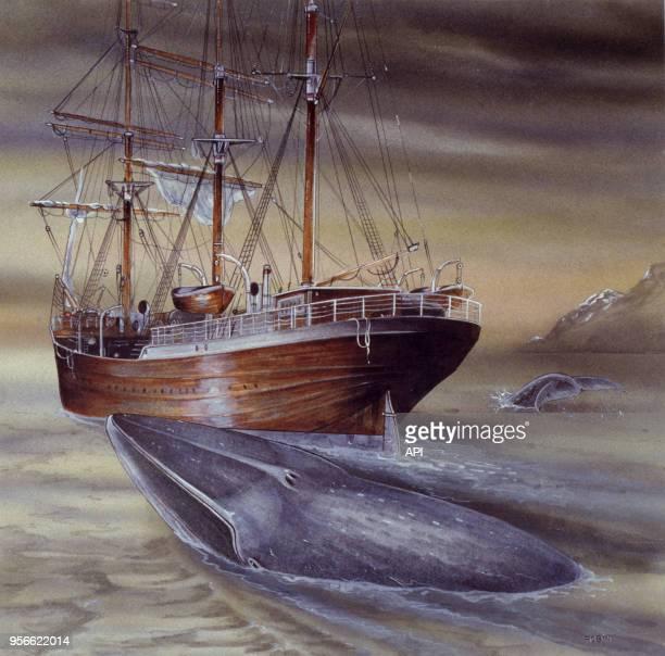 Dessin représentant un rorqual bleu près d'un voilier