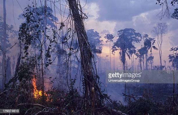 Destruction Amazon BrazilVicinitiy Rio Branco Burning The Forest To Enlarge Cattle Ranches In the last ten years alone 10% of the Amazon has been...