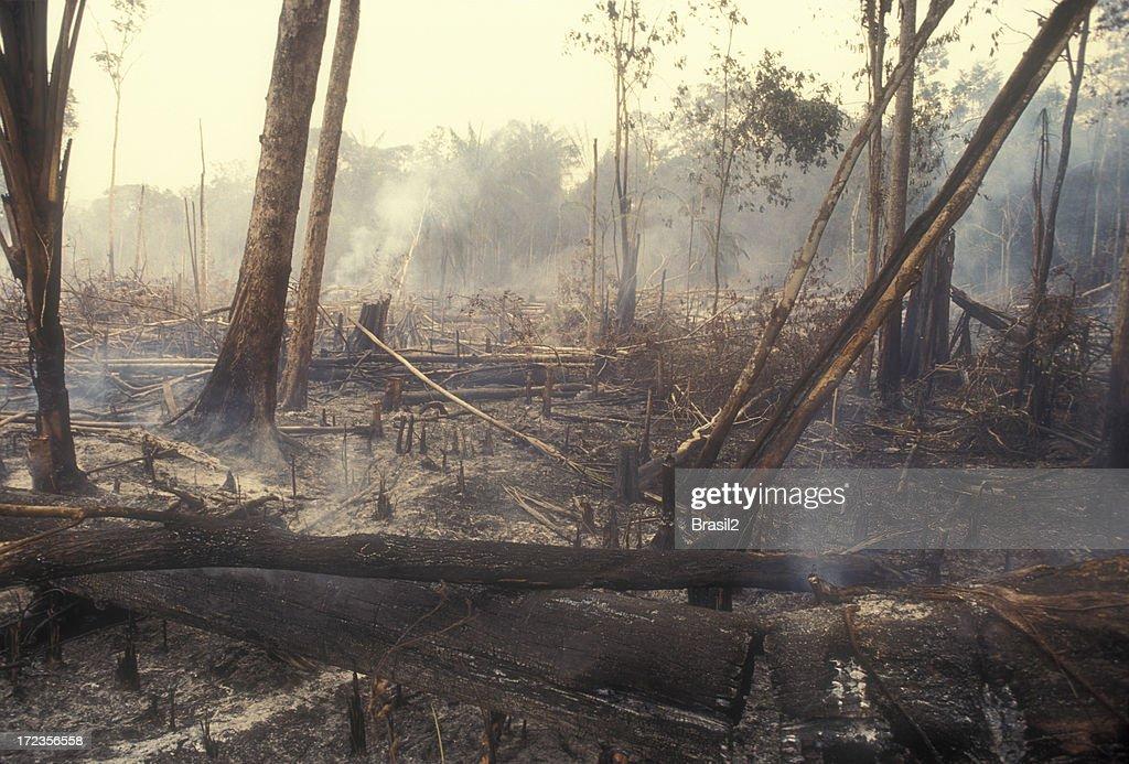 Destruction Global Warming : Stock Photo
