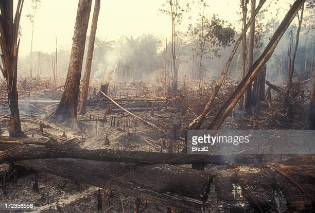 destruction global warming - deforestation stock pictures, royalty-free photos & images