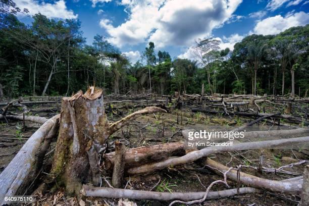 destruction of the rainforest - destruction stock pictures, royalty-free photos & images