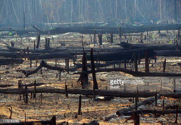 destruction - deforestation stock pictures, royalty-free photos & images