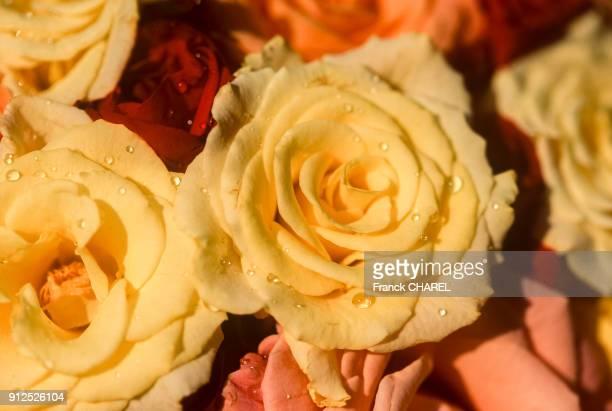 Detail d'un bouquet de roses jaunes lors de la fete des roses de KelaatM'Gouna Maroc