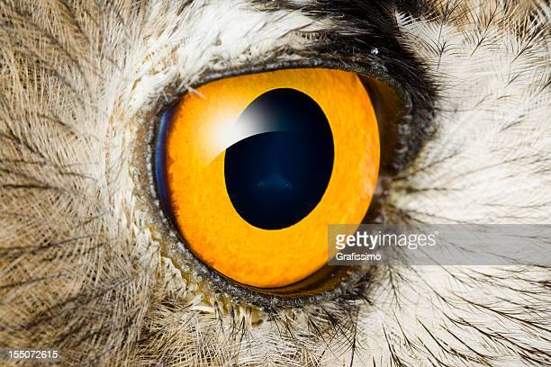 dettaglio dell'occhio di gufo reale - gufo reale foto e immagini stock