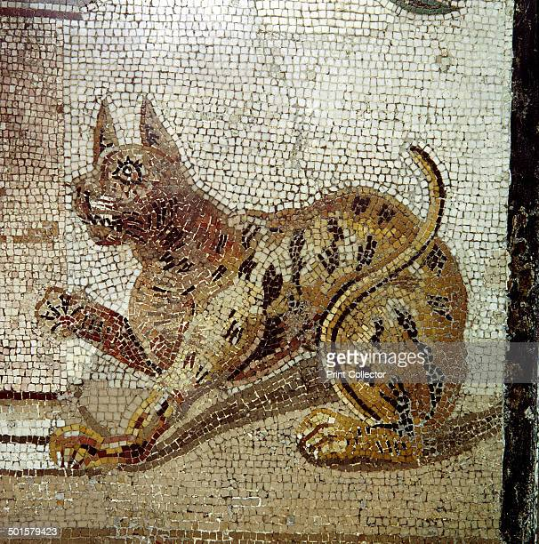 Detail from Roman mosaic showing a cat Pompeii Italy