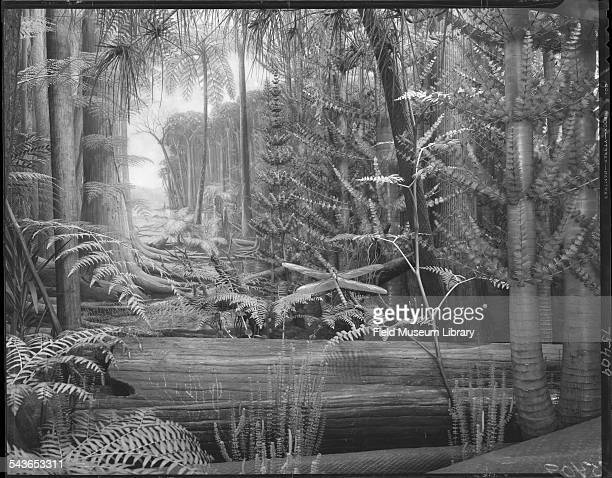 Detail from the Carboniferous Forest diorama showing a dragonfly and calamites among other things in Hall 38 of the Field Museum Chicago Illinois 1932
