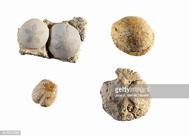 detail of 4 fossils of species different from starfishes. - fossil site stock pictures, royalty-free photos & images