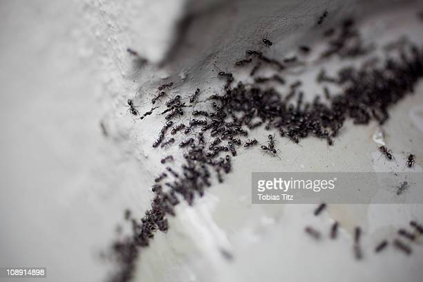 detail of a colony of ants - pest stock photos and pictures