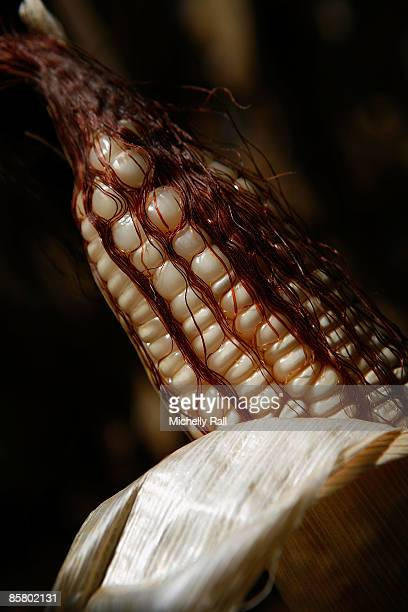 A detail of a corn on the cob corn fields near to the Kumbali Lodge where Madonna is staying during her attempts to adopt the child Mercy James on...