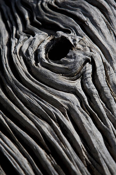 Detail of a dead tree
