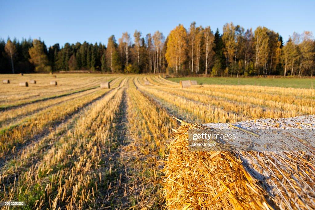 Detail of a frozen hay bales in field : Stock Photo