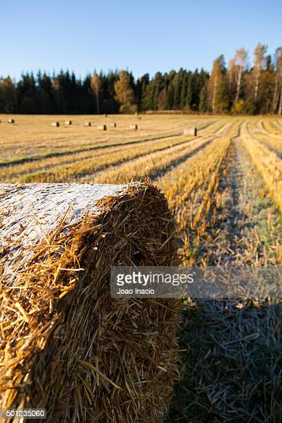 Detail of a frozen hay bales in field