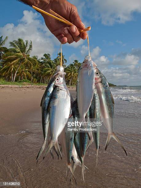 detail of a hand of a fisherman with sardines - brazilian men stock photos and pictures