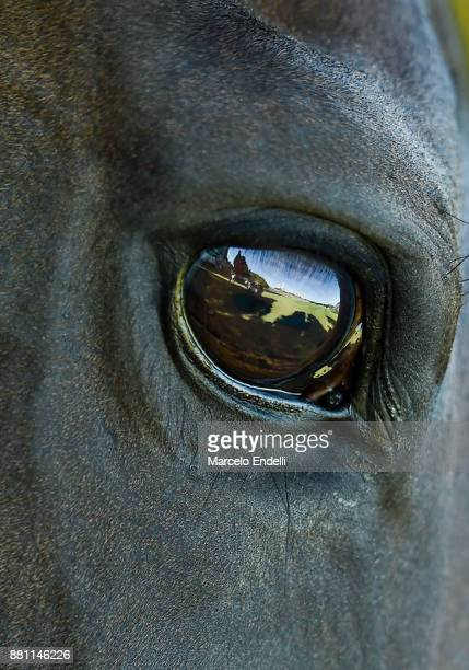 Detail of a horses eye during during a match between Ellerstina and Alegria as part of the HSBC 124°° Argentina Polo Open at Campo Argentino de Polo...