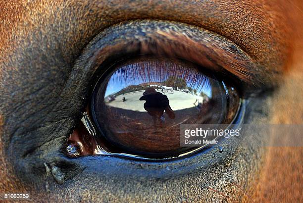 A detail of a horse's eye during the Dressage Festival of Champions the USEF Selection Trials for the 2008 US Olympic Team at Oaks Blenheim on June...