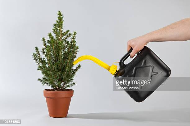 Detail of a person using an gas can to water a Christmas tree
