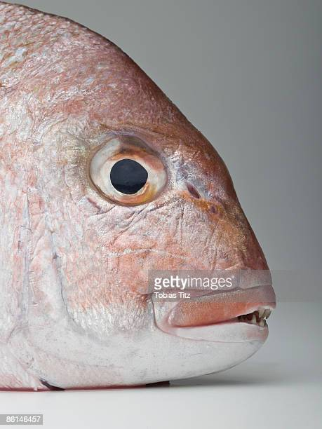 Detail of a red sea bream