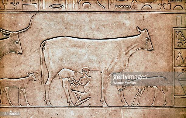 A detail of a relief on the sarcophagus of Queen Kawit wife of the pharaoh Mentuhotep II A man milking a cow Egypt Ancient Egyptian 11th Dynasty...