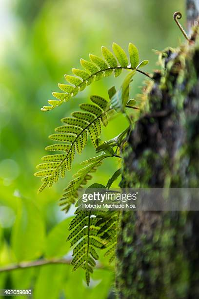 Detail of a wild fern in nature preservation zone in Cuba