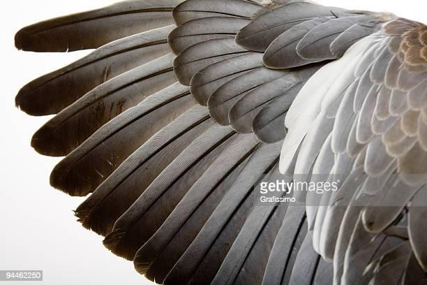 Détail d'une aile