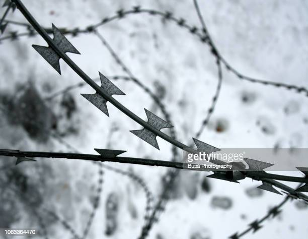 detail of barbed wire with snow in the background - holocaust stock pictures, royalty-free photos & images