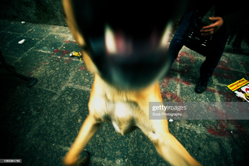 Detail of barking dog mouth : Stock Photo