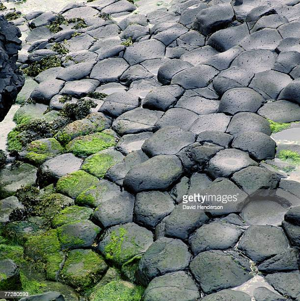 Detail of basalt columns of The Giant's Causeway
