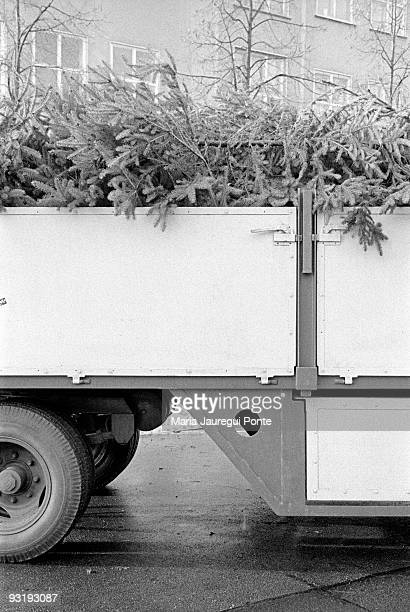 Detail of Christmas trees piled up in a truck