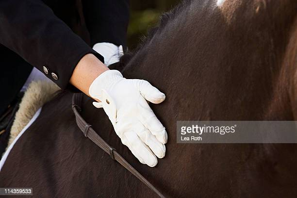 detail of dressage rider stroking horse