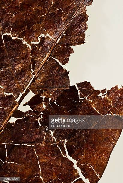 detail of dry leaf - fstoplight stock photos and pictures