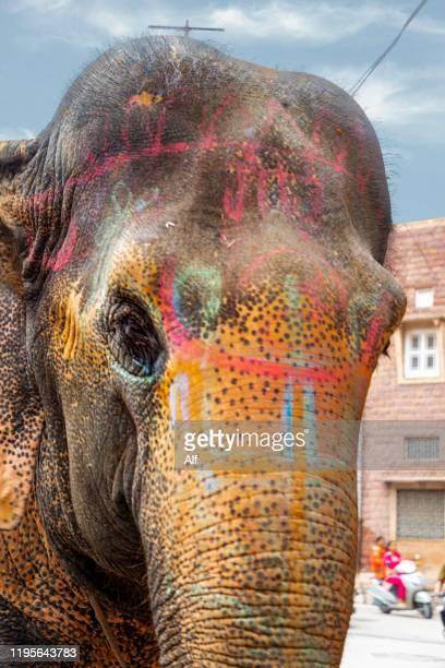 detail of elephant head in jodhpur rajasthan, india - soltanto un animale foto e immagini stock