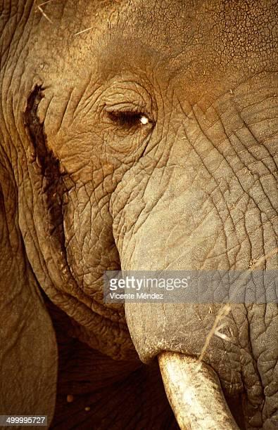Detail of elephant, Lake Manyara