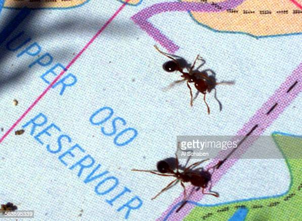 A detail of Fire Ants on a Thomas Guide map shown to Keith McCubbin director of the Queensland Fire Ant Control Center during a tour Thursday at the...