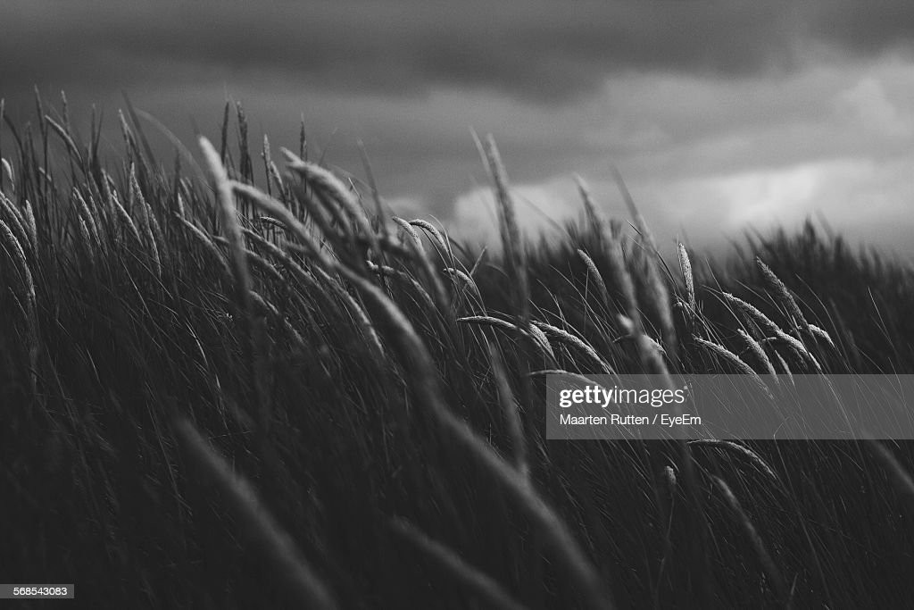 Detail Of Grass Growing On Field At Dusk : Stock Photo