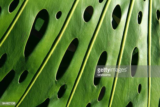 Détail de feuille verte