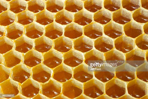 Detail of honeycomb filled with honey.