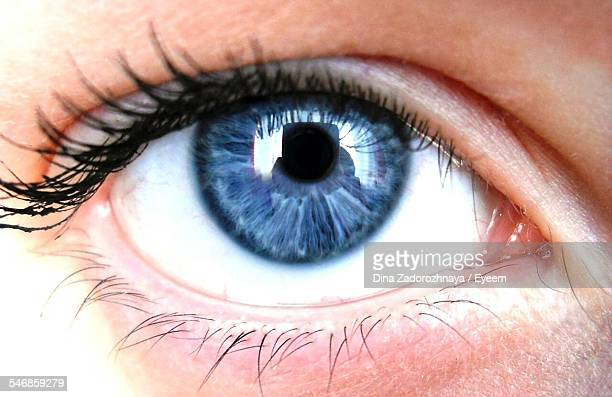 detail of human eye - yeux bleus photos et images de collection