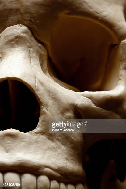 Detail of human skull