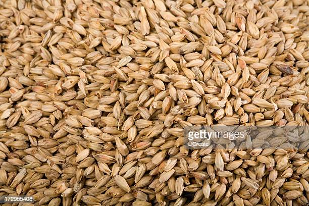 Detail of Malted Barley