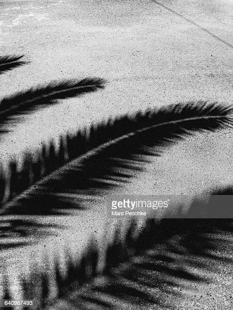 Detail of palm tree branches in shadow