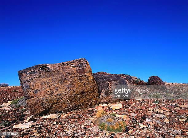 detail of petrified log stumps under a clear blue sky. santa cruz province, bosques petrificados, national monument cueva de las manos, argentina, patagonia. - cueva de las manos ストックフォトと画像
