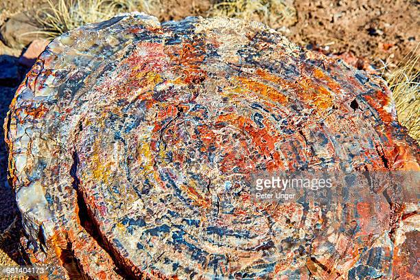 detail of petrified wood in crystal forest,arizona - petrified log stock pictures, royalty-free photos & images