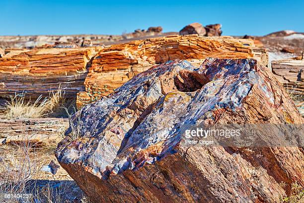 Detail of petrified wood in Crystal Forest,Arizona
