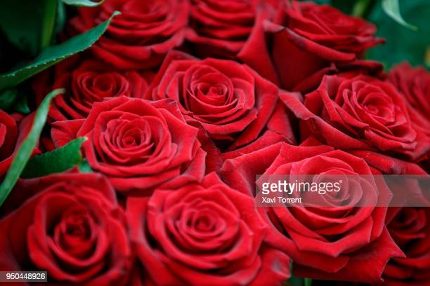 Detail of roses at Sant Jordi's day on April 23, 2018 in Barcelona, Spain.