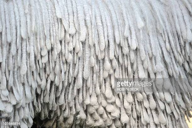 A detail of the coat of Clyde a Komondor at the Buddha Bark WonderPark luxury wellness suite on June 4 2010 at Chaz Dean Studio Zen Garden in Los...