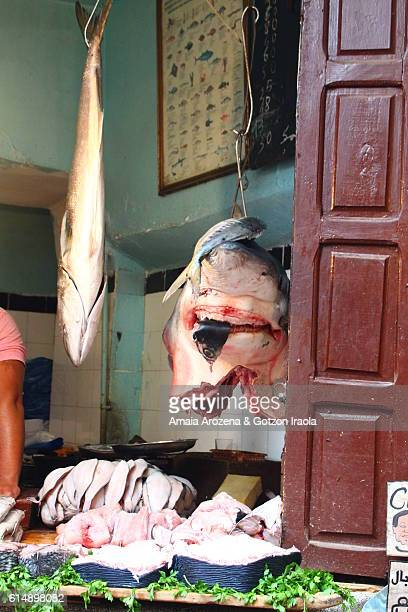 Detail of the entrance of a fish shop in the souks of Marrakech
